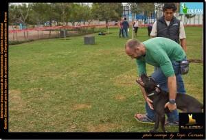 Modelando a Ajax para tranquilizarle y estabilizarle emocionalmente. Gracias Luis por traer un perro tan interesante y por hacerlo tan bien durante el seminario.