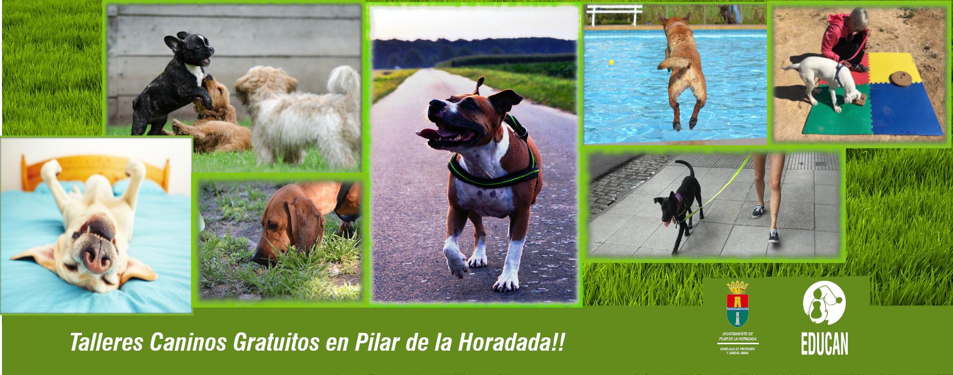 Talleres caninos gratuitos en colaboración con el ayuntamiento de Pilar de la Horadada