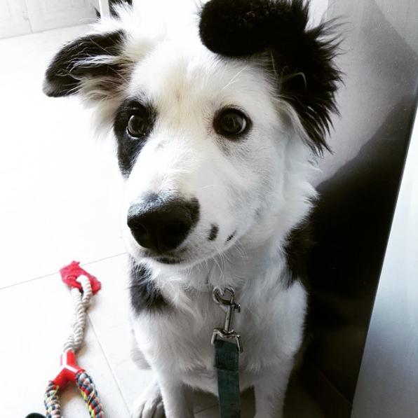 Puppy Party | Fiesta de Cachorros | 17 de febrero en Europolis Veterinaria Las Rozas
