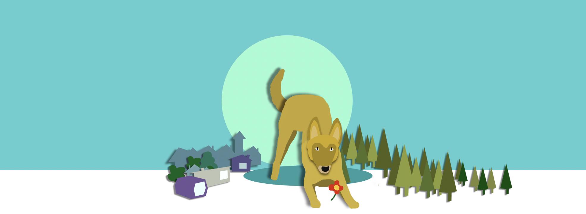 [Online] Curso de Educador Canino AVANZADO