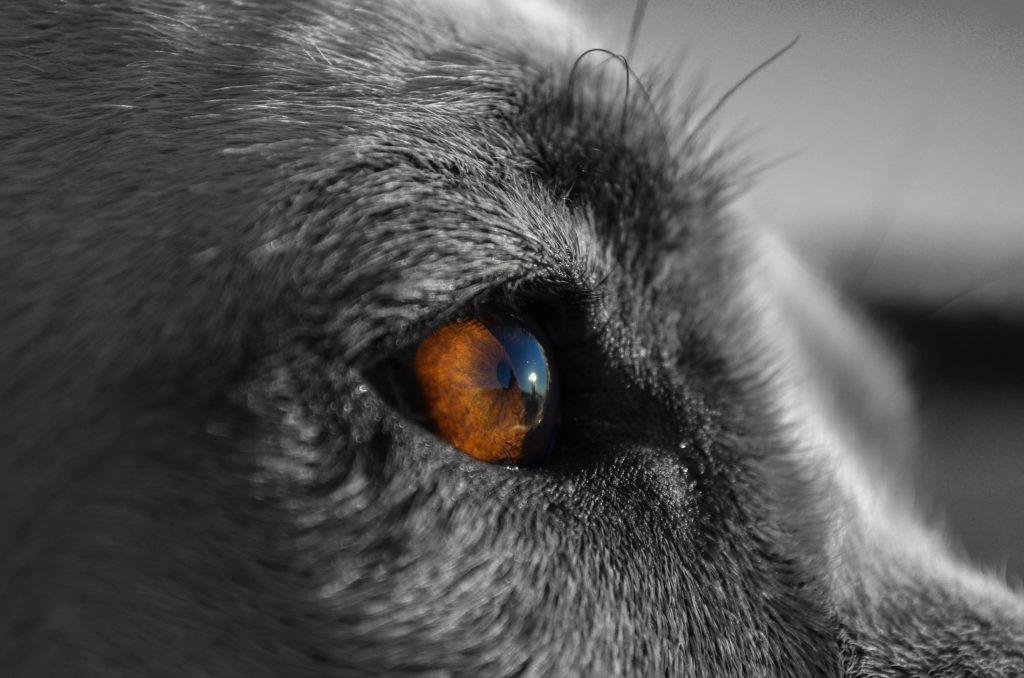 Detrás del ojo es donde sucede lo más importante. Donde debe suceder. No rompas eso.