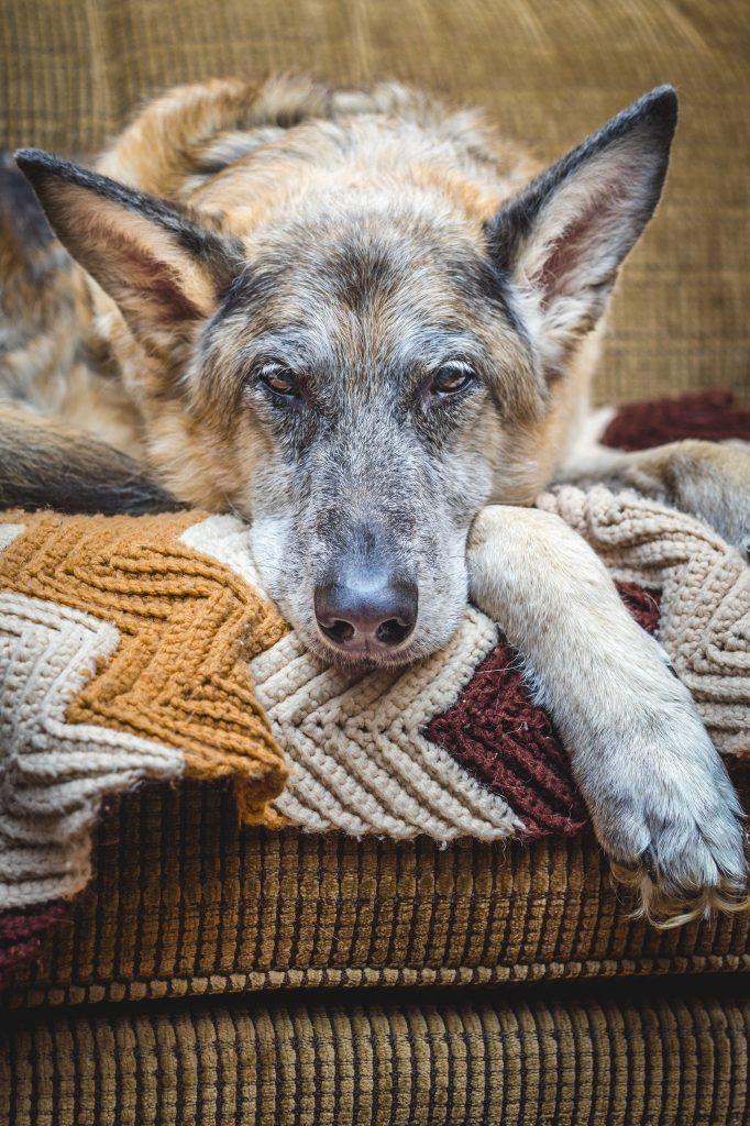 Objetivo mental logrado: Ya estamos en el sofá tan a gustito :-) :-)
