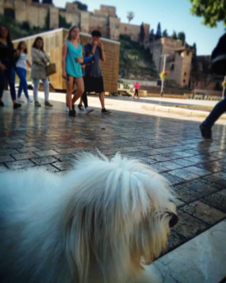 Cursos EDUCAN en Málaga: Haciendo perros más felices
