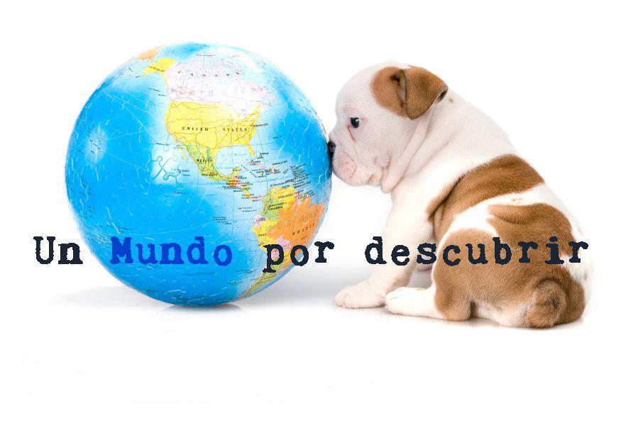 Curso de Educación en Grupo para Cachorros-Sopuerta