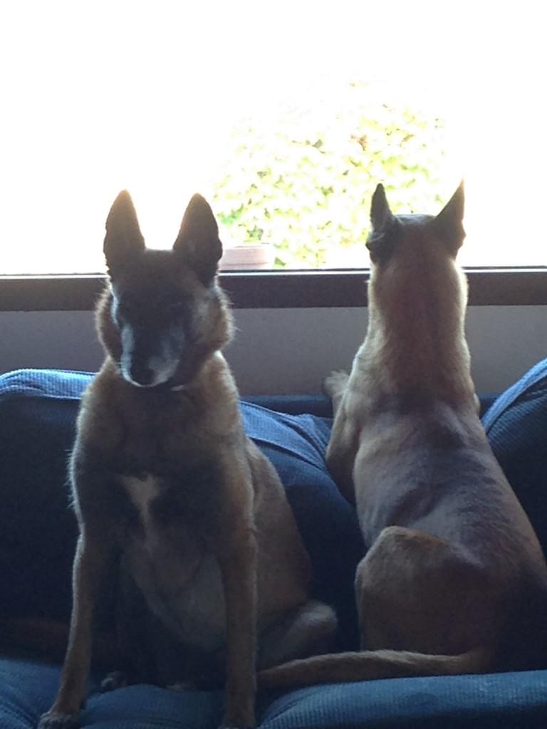 Cata y Gastón frente a la ventana