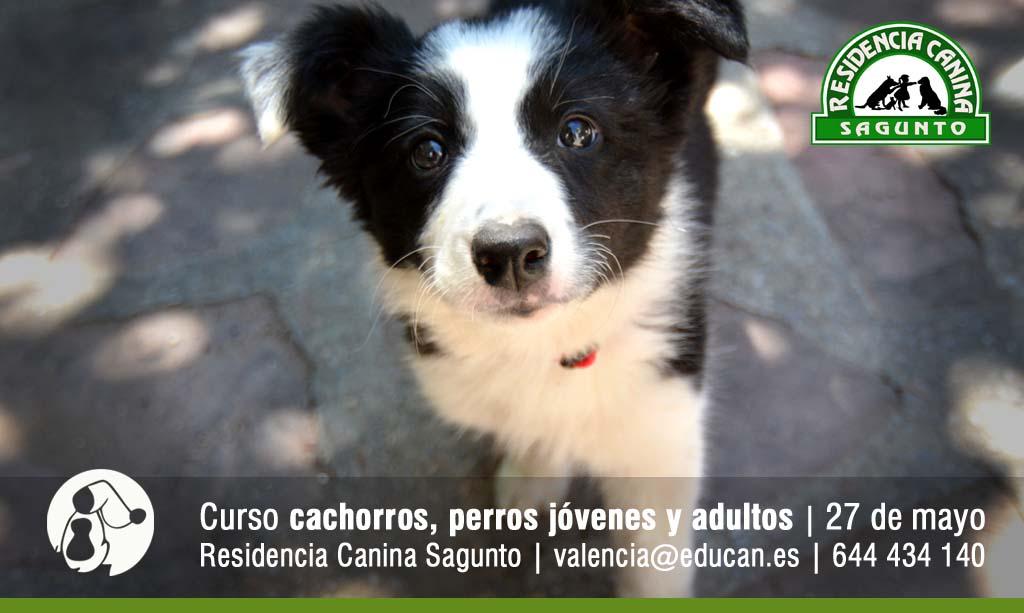 cartel curso adiestramiento canino en valencia sagunto