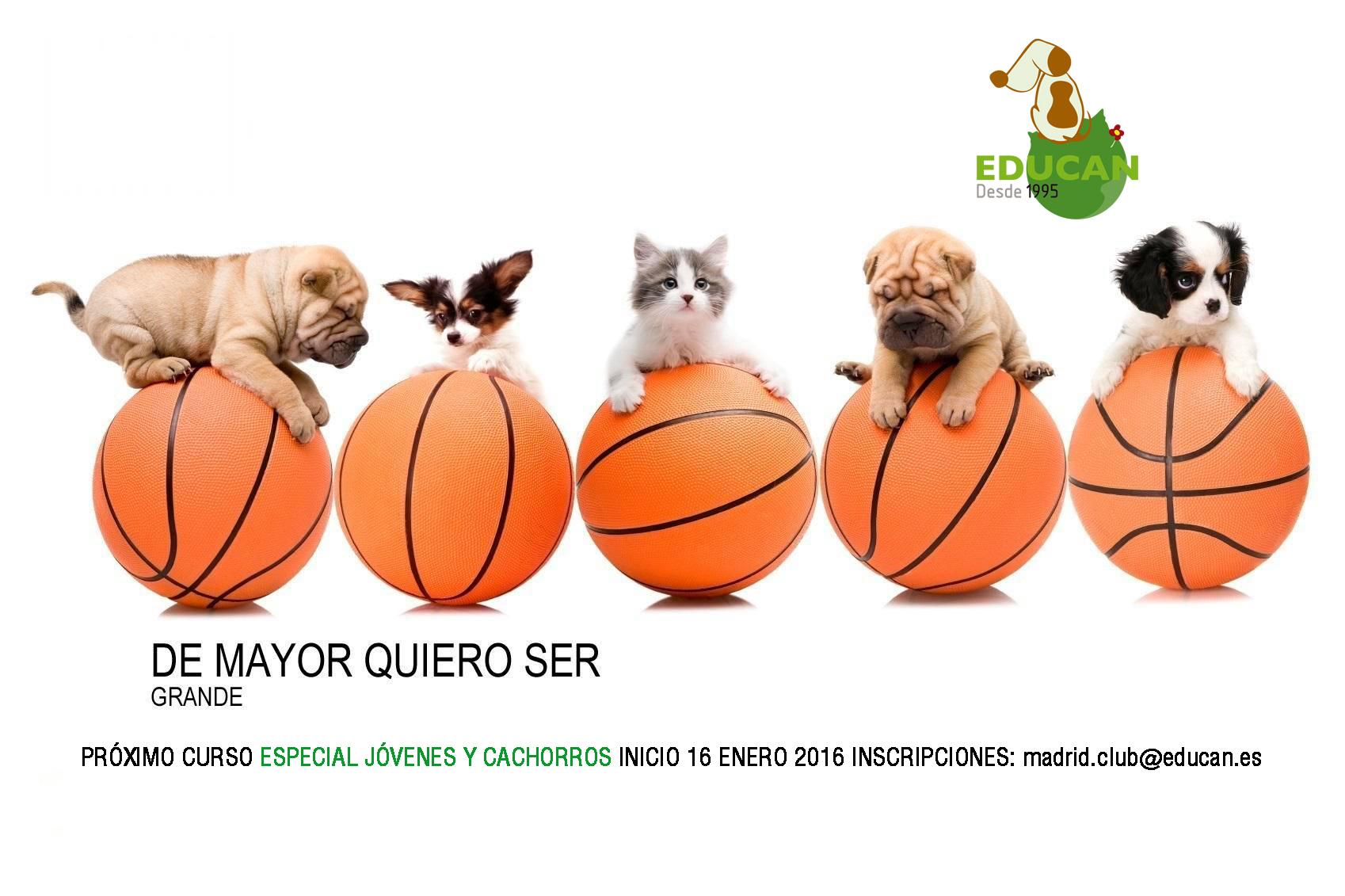 Cursos para cachorros y perros jóvenes. 16 de enero de 2016