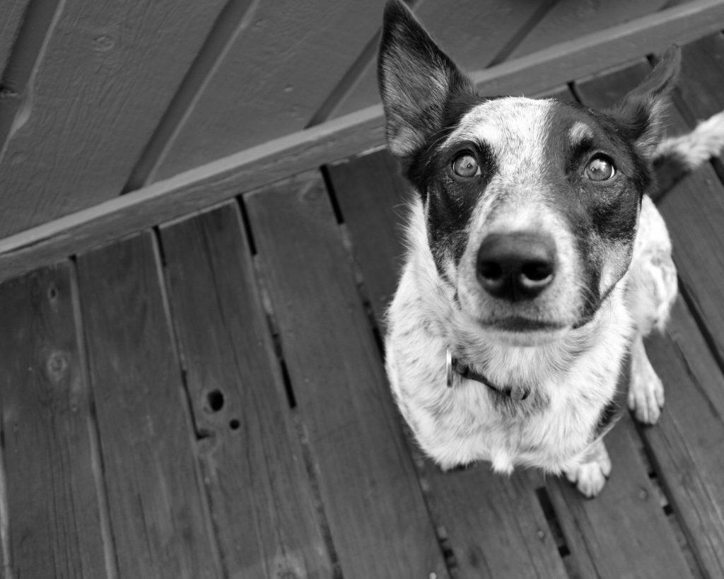 dog-1283102