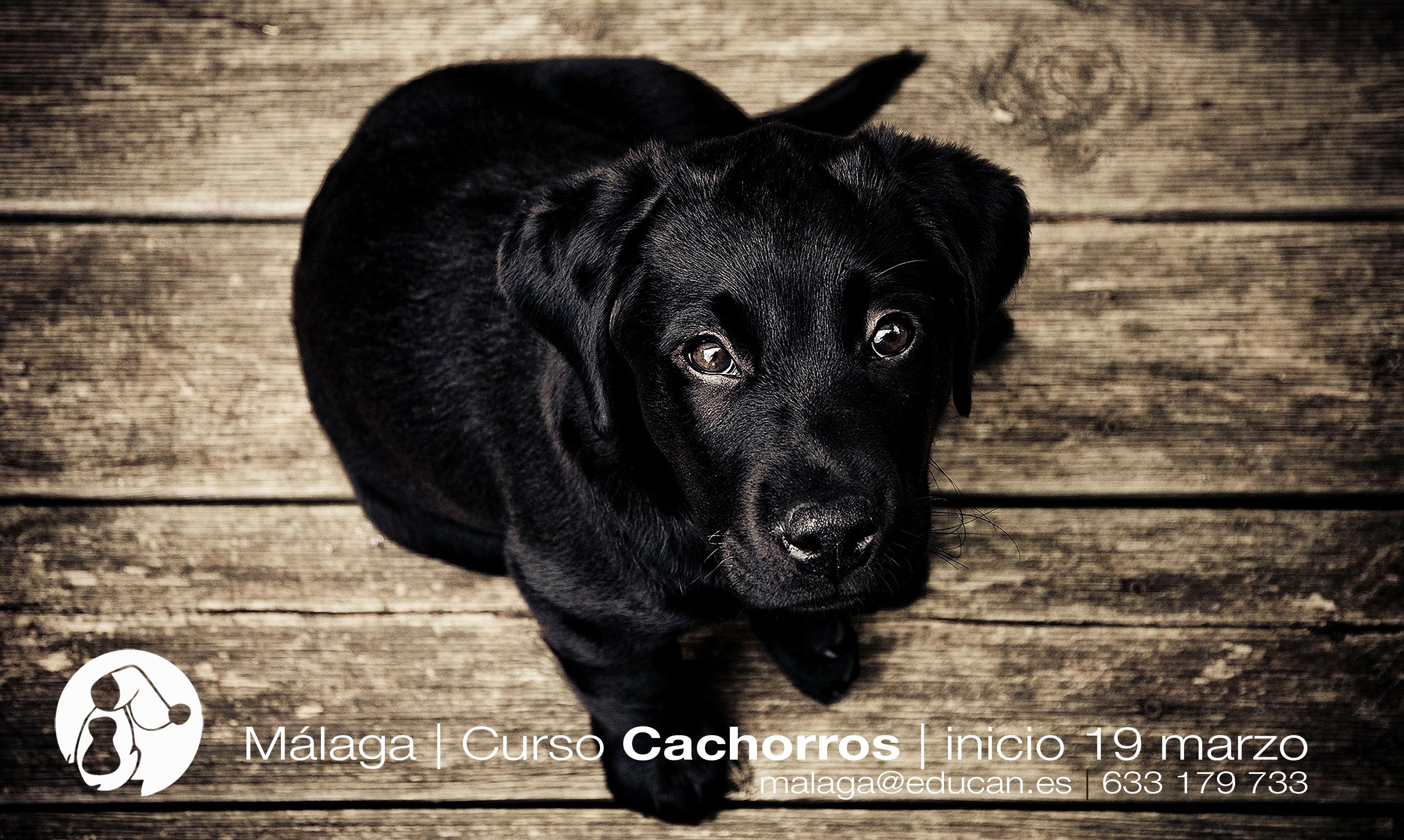 Cachorros: sentimientos encontrados, ilusión y vértigo