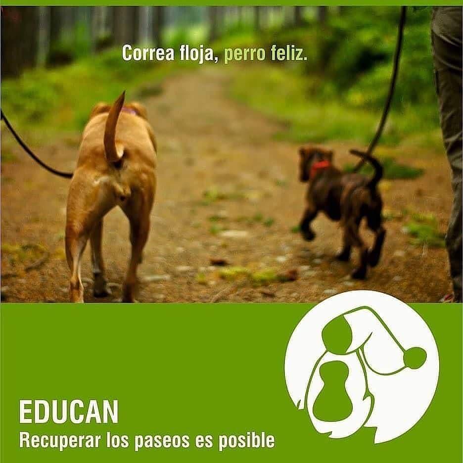 """Talleres """"Correa Floja, Perro Feliz"""" y «Puppy Party» EDUCAN para APA SOS FUNDAZIOA"""